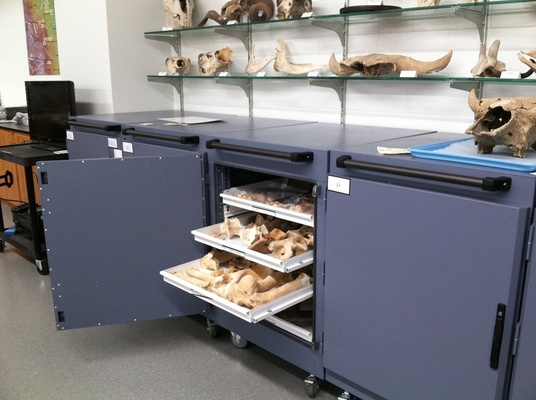 Collections Storage Cart